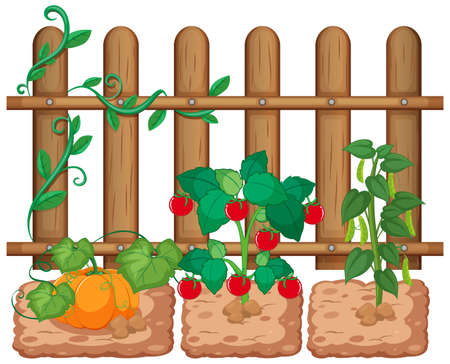 Vegetables growing in the garden on white background illustration