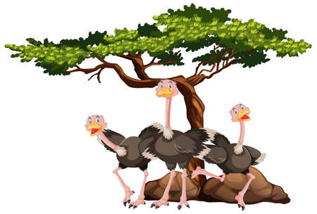 Group of ostrich under the tree  on white background illustration