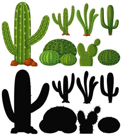Set of cactus plant illustration