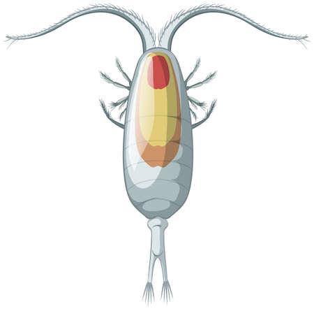 Isolated copepods on white background illustration