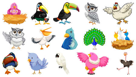Set of different birds cartoon style isolated on white background illustration
