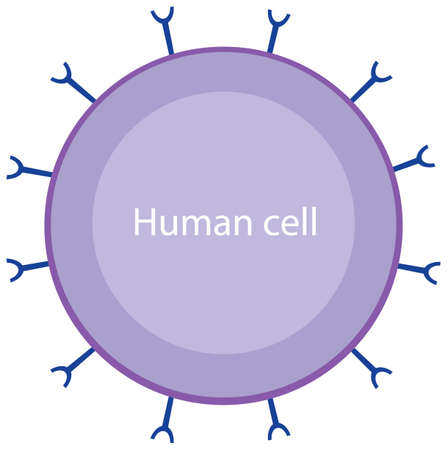 Informative human cell and coronavirus diagram illustration