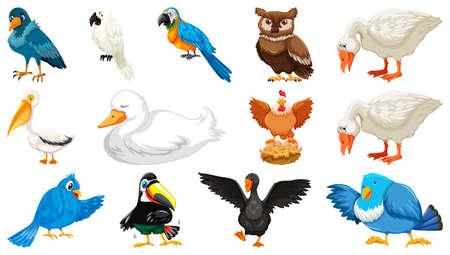 Set of diffrent birds cartoon style isolated on white background illustration