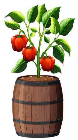 Sweet pepper plant in wooden pot isolated on white background illustration