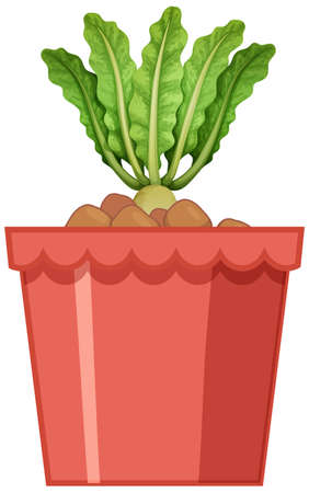 Radish with leaves in red pot isolated on white background illustration Ilustracja