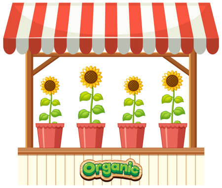 Organic sunflower on the shop illustration
