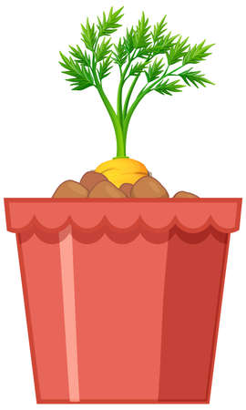 Carrot with leaves in red pot isolated on white background illustration