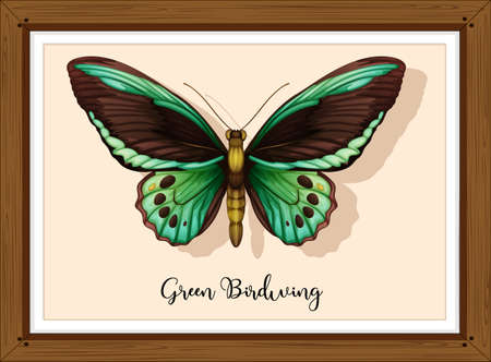 Butterfly on wooden frame illustration