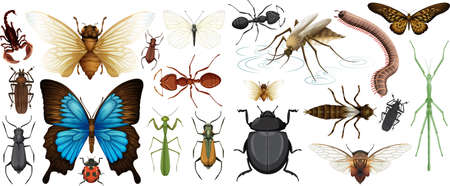 Different insects collection isolated on white background illustration