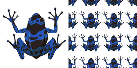 Blue poison dart frog isolated on white background and seamless illustration