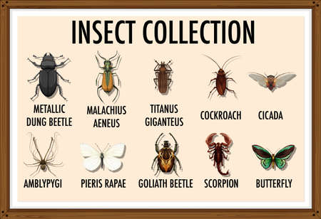 Entomology list of insect collection illustration Ilustração