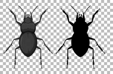 Beetle on transparent background illustration Ilustração