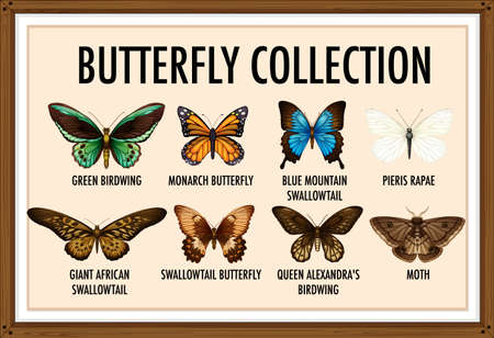 Set of butterfly collection illustration
