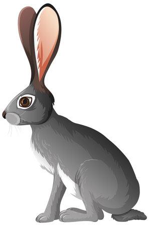 Jackrabbit isolated on white background illustration