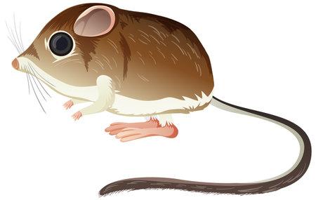 Kangaroo Rat isolated on white background illustration