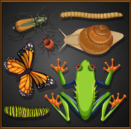 Set of different insects on black background illustration