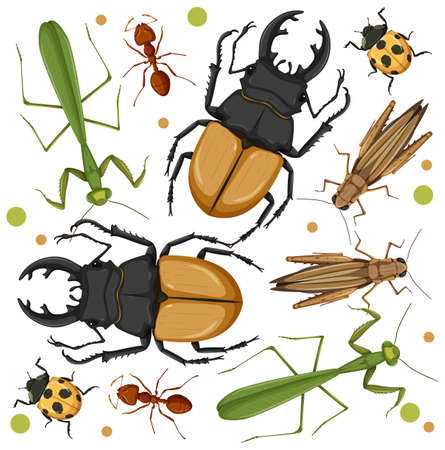 Set of different insects on white background illustration 向量圖像
