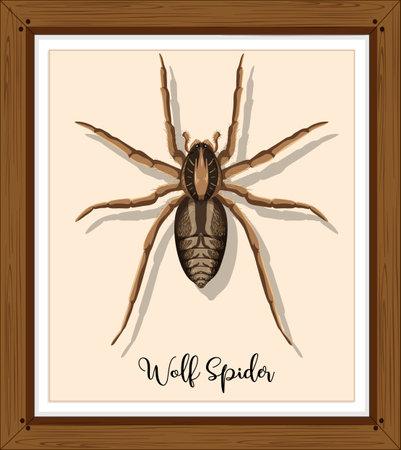Wolf spider in wooden frame illustration