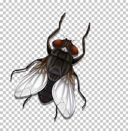 Fly insect isolated on transparent illustration