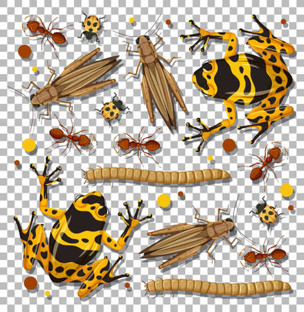Set of different insects on transparent background illustration