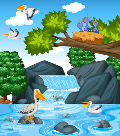Many brown pelicans in the waterfall scene illustration