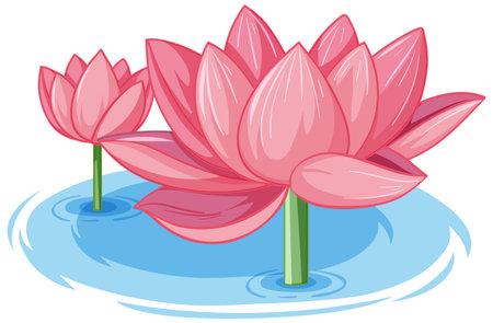 Two pink lotus in water illustration
