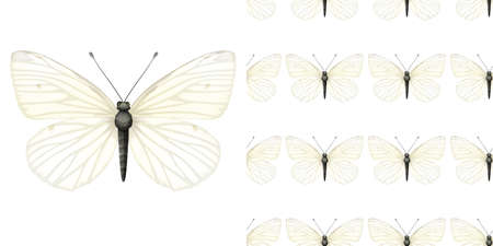 Butterfly insect and seamless background illustration