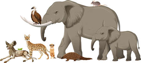 Group of wild african animal on white background illustration Vectores