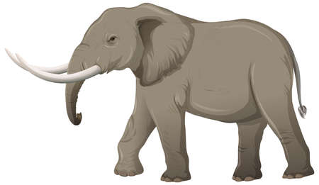 Adult elephant with ivory in cartoon style on white background illustration 矢量图像