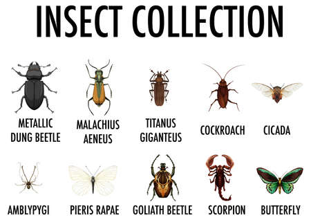 Entomology list of insect collection illustration Иллюстрация