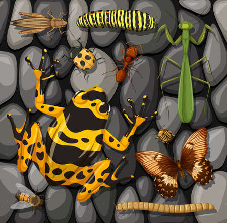Set of different insects isolated on stones texture illustration