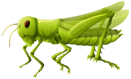 Close up of grasshopper in cartoon style on white background illustration 矢量图像