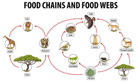 Education poster of biology for food webs and food chains diagram illustration