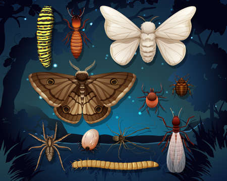 Set of different insects isolated illustration