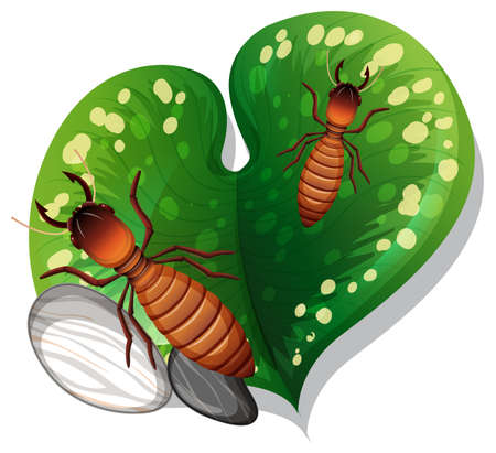 Top view of termite on a leaf isolated illustration Vector Illustration