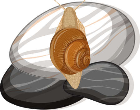 Top view of snail on a stone on white background illustration Vector Illustratie