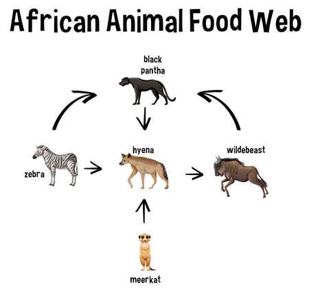 African Animal Food Web for education illustration Векторная Иллюстрация