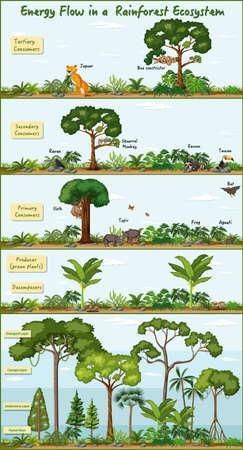 Energy flow in a rainforest ecosystem diagram illustration
