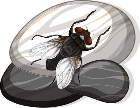 Top view of house fly on a stone on white background illustration