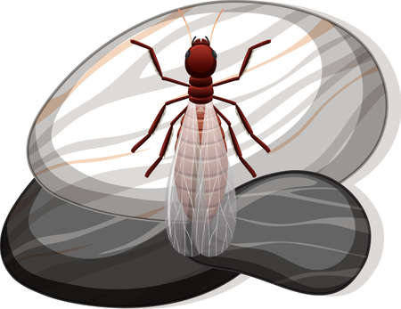 Top view of termite on a stone on white background illustration