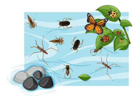 Top view of aquatic insects in the pond illustration