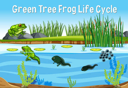 Green Tree Frog Life Cycle illustration