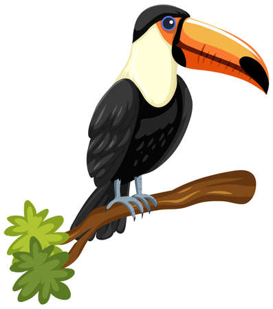 Toucan bird on a branch isolated on white background illustration