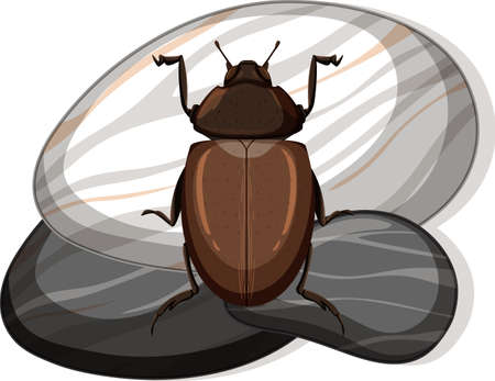 Top view of african black beetle on a stone on white background illustration