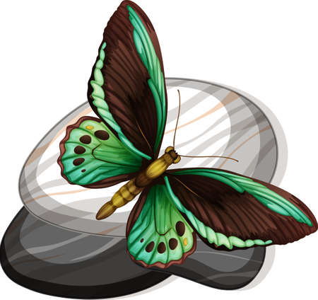 Top view of butterfly on a stone on white background illustration Stock Illustratie