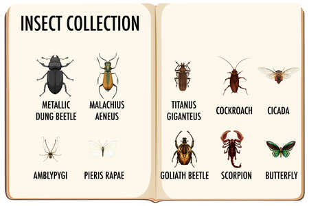 Set of insect collection in the book illustration