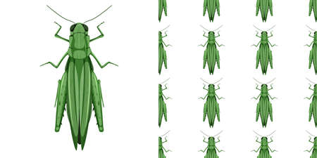 Grasshopper insects isolated on white background and seamless illustration