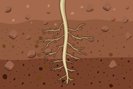 Close up of plant roots in soil illustration