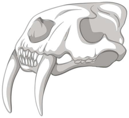 Toothsaber skeleton on white background illustration Vektoros illusztráció