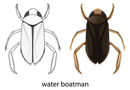 Water boatman in colour and doodle isolated illustration